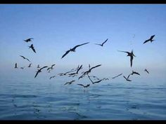 Sergio Lopes - Para onde vão as aves. Lindo louvor, fala profundamente ao coração!