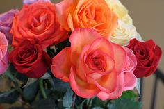 Roses. All colors.