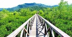 Keindahan Hutan Bakau Margomulyo Perpaduan Wisata Edukasi dan Wisata Alam