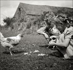 vintage 1951 black and white photo of children feeding a chicken in Wales