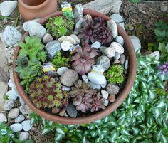 Guildwood Gardens...: Sempervivum - Crassulaceae, Hen and chicks - Hauswurze