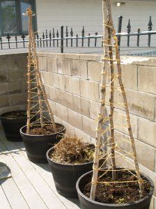 Simple idea for building a cucumber trellis in a container.