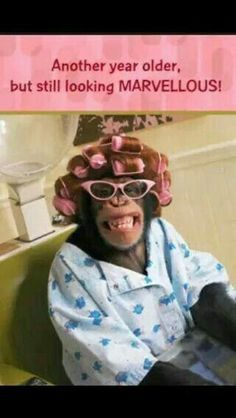 """91 Sister Birthday Memes - """"Another year older, but still looking marvelous!"""" meme 91 Sister Happy Birthday Memes for Your Sibling That Is Also a Friend Sister Birthday Quotes Funny, Funny Happy Birthday Pictures, Funny Happy Birthday Wishes, Happy Birthday Greetings, Funny Birthday Cards, Birthday Memes, Sister Birthday Wishes, Birthday Humorous, Birthday Sayings"""