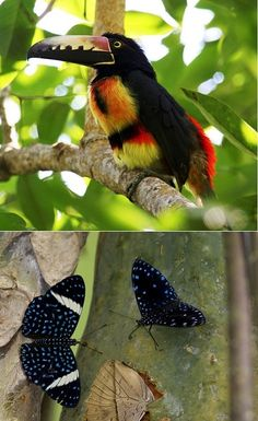 Bird and butterfly sightings are common in Pico Bonito.