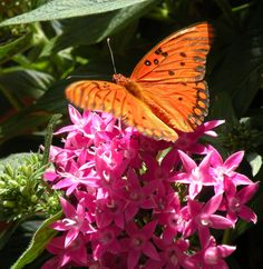 Obrich Gardens Madison, WI Butterflies exhibit always a fun time in summer with my girls