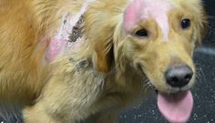 Dog's Burns Will Heal, But His Broken Heart May Never Recover