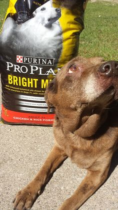 Helping Your Dog Through Nutritional Transitions #BrightMind AD @PetSmar