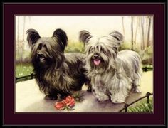 English-Print-Skye-Terrier-Puppie-Dogs-Dog-Puppy-Vintage-Art-Picture-Poster