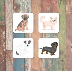 Magpie - Sit! Coasters 1 - Set of 4 - Border Terrier, Chihuahua, Daschund, & Jack Russell