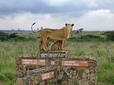 Visit the Nairobi National park, a DIY safari where you get to explore the vast species of flora and fauna that can only be found in Africa. Spent all day driving through! Nairobi City, Kenya Nairobi, Kenya Africa, National Park Tours, Reserva Natural, African Countries, African Safari, Capital City, Tanzania