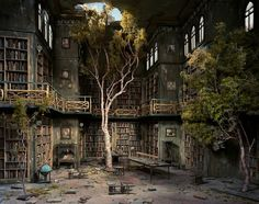 Strange Abandoned Library With a Tree Growing in it.