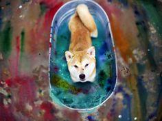 Bored Panda - Aiko, Trinh's Shiba Inu, poses in a colorful bath.