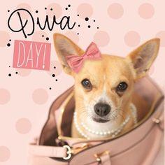 Diva day! verjaardag chihuahua