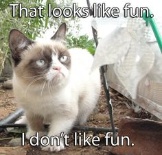 Grumpy cat frowns on your shenanigans. Grumpy cat is not impressed. I wonder if grumpy cat is an engineer. I did find some Grumpy Cat gifs: Grumpy Cat say \ Grumpy Cat Quotes, Funny Grumpy Cat Memes, Funny Animal Memes, Funny Animal Pictures, Funny Cats, Funny Animals, Cute Animals, Funny Memes, Grumpy Kitty