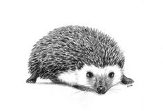 little hedgehog by aileensea on DeviantArt Character Description, Drawing Tools, Animals And Pets, Owl, Deviantart, Hedgehogs, Bird, Graphite, Drawings