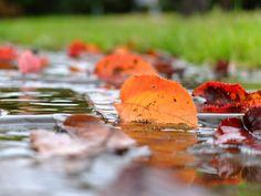 [2012.7.20] 물 위의 낙엽 X10    접사와 반영의 조화가 멋진 사진입니다.    물 위에 떨어진 나뭇잎이 붉게 물든 것을 보니 가을인 것 같네요.    장마철인 요즘, 청명한 가을 하늘이 그립기도 합니다.    <사진정보>    촬영 모드 - Aperture-Priority AUTO   감도 - ISO 100   다이나믹 레인지 - 100%   조리개 - f/2.8   셔터스피드 - 1/220   초점거리 - 28.4mm   화이트 밸런스 - AUTO   필름 시뮬레이션 - Velvia    http://blog.naver.com/fujifilm_x/150136710447