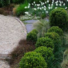 Muhlenbeckia and boxwood and grass by jardinsurlasiene garden inspiration
