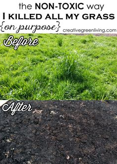 Creative Green Living: The Non-Toxic Way I Killed All My Grass (On Purpose!)