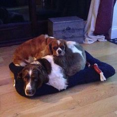 Cuddle, anyone? #DoggyMember Foster and Trigger