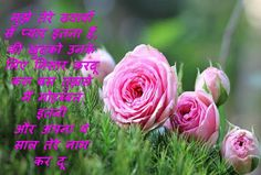 2000+ Happy New Year Wishes, Messages, Quotes, Poem, Slogan, HD Images, Status, Shayari {Latest Updated 2021} Flora Flowers, Flowers Nature, Beautiful Flowers, Nature Nature, Good Morning Love Messages, Good Morning Images, Morning Pics, Morning Pictures, Morning Quotes