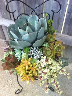 "A succulent creation I put together...I call it the ""Time Out"" chair..;) I think I need to go take a time out."