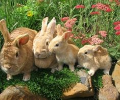 We Heart It | Fashion, wallpapers, quotes, celebrities and so much more Cute Baby Bunnies, Bunny, Beautiful Creatures, Animals Beautiful, Beautiful Swan, Farm Animals, Cute Animals, Pretty Animals, Funny Animals