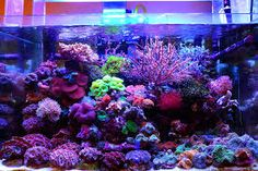nano reef - Google Search