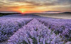21-06-2013 (just 4 years ago) Fields of lavender near Chirpan Thracian Plain, Bulgaria 🇧🇬 #picoftheday #clouds #field #lansdcape #lansdcapephotography #lavender #orange #purple #summer #sun #sunset #thracia #bulgaria #lovebulgaria #travelbulgaria #travel #trip #amazing_shots #bestpics #travelphography #travelpics #travelandleisure #nikon #d7100 #sigmalens #hdr #hdrphotography #longexposure #benro #tripod