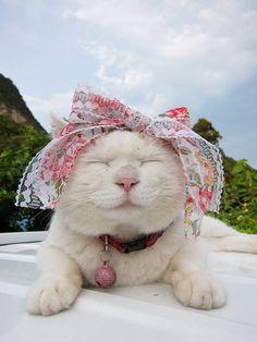 Cute Shiro!! But Shiro is BOY.... :D