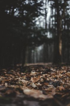 Hiking | A fall hike in the woods