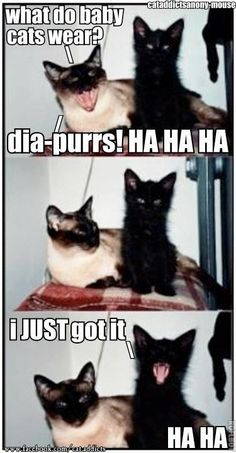#cats #kittens #pets #animals #funny