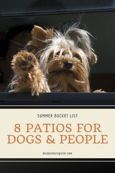 There's room for pups at these dog-friendly restaurants in the Des Moines area. Add it to your summer bucket list or things to do. Hoover High School, Best Weekend Trips, Bloody Mary Bar, Restaurant Patio, Popular Crafts, Buy Photos, Summer Bucket Lists, Brewing Company, Home Brewing