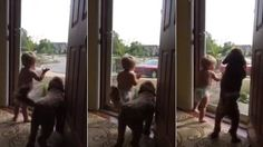 Daddy's home! Adorable toddler and dog jump for joy as father gets home from work