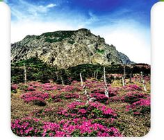 Hallasan National Park official webpage Jeju Island, 2 Photos, Heritage Site, Dream Vacations, Vineyard, National Parks, Places To Visit, Korea, Hiking
