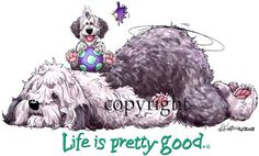 vintage old english sheepdog pic | Old English Sheepdog Life Is Pretty Good by dog cartoonist Mike ...