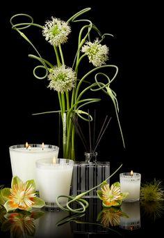 Lemongrass & Ginger Home Fragrance Collection #NESTFragrances #HomeFragrance