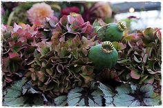 Succulents, Autumn, Fruit, Flowers, Plants, Fall, Florals, Succulent Plants, Planters