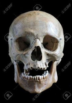 6556050-Skull-of-the-person-close-up-on-a-black-background-Stock-Photo.jpg (906×1300)