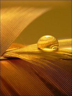 ❧ couleur... les miels ❧