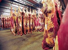 View of meat hanging in slaughterhouse | Stock Photo | Colourbox