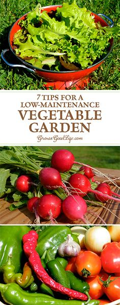 Do you want to grow your own food, but worry that you don't have time to tend to a garden? These tips will help you plan a low-maintenance vegetable garden that will reward you with fresh food throughout the garden season.