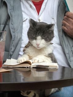 A Cat Joins its Owner Reading a Book at a Tokyo Cafe (this is SO cool: in Japan,  there are Cat Cafe's where kitties are given free-range to interact with coffee/tea drinkers. Adoption rates are very high! Instead of languishing in a shelter, cats are placed where people are. Hey-STARBUCKS..pay attention!)