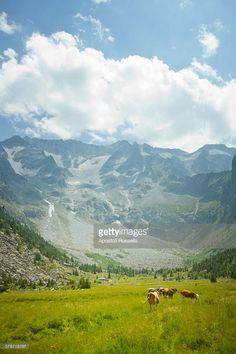 Natural park Adamello, Valcamonica
