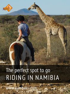 Get ready for your riding safari in Africa! Top horses, knowledged guides and the beauty of untamed nature at Kambaku Safari Resort, Namibia  #horsesafari #safarionhorseback #reitsafaris #riding