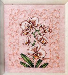 Cross-împletit.  Orhidee.  Schema (1) (361x400, 141Kb)
