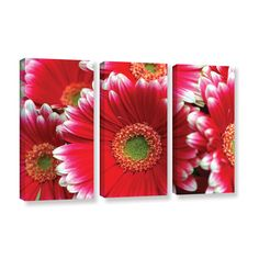 Lots A Daisies by Kathy Yates 3 Piece Photographic Print on Gallery Wrapped Canvas Set