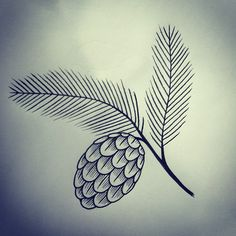 Pine cone sketchings #sketch #drawing #art #illustration #linework #line #pinecone #pine #tree #nature