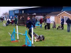 Australian Shepherds Agility - YouTube