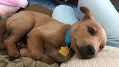 This is no Scrappy Doo. This is just the adorable prequel Scooby Doo. Cute Puppies, Dogs And Puppies, Doggies, Pet Dogs, Scooby Doo Dog, Scooby Doo Tattoo, Dog Grooming, Cute Baby Animals, Stuffed Animals