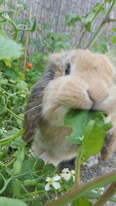 Funny Bunnies, Baby Bunnies, Cute Bunny, Animals And Pets, Funny Animals, Bunny Care, Pet Rabbit, Rabbit Pen, Cute Little Animals